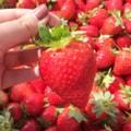 草莓姐头像