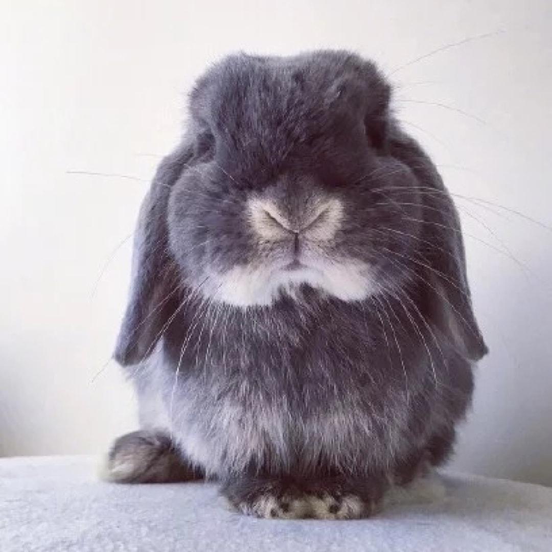 彼得兔的窝窝