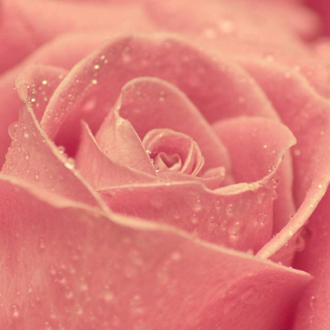 粉色浪漫季节